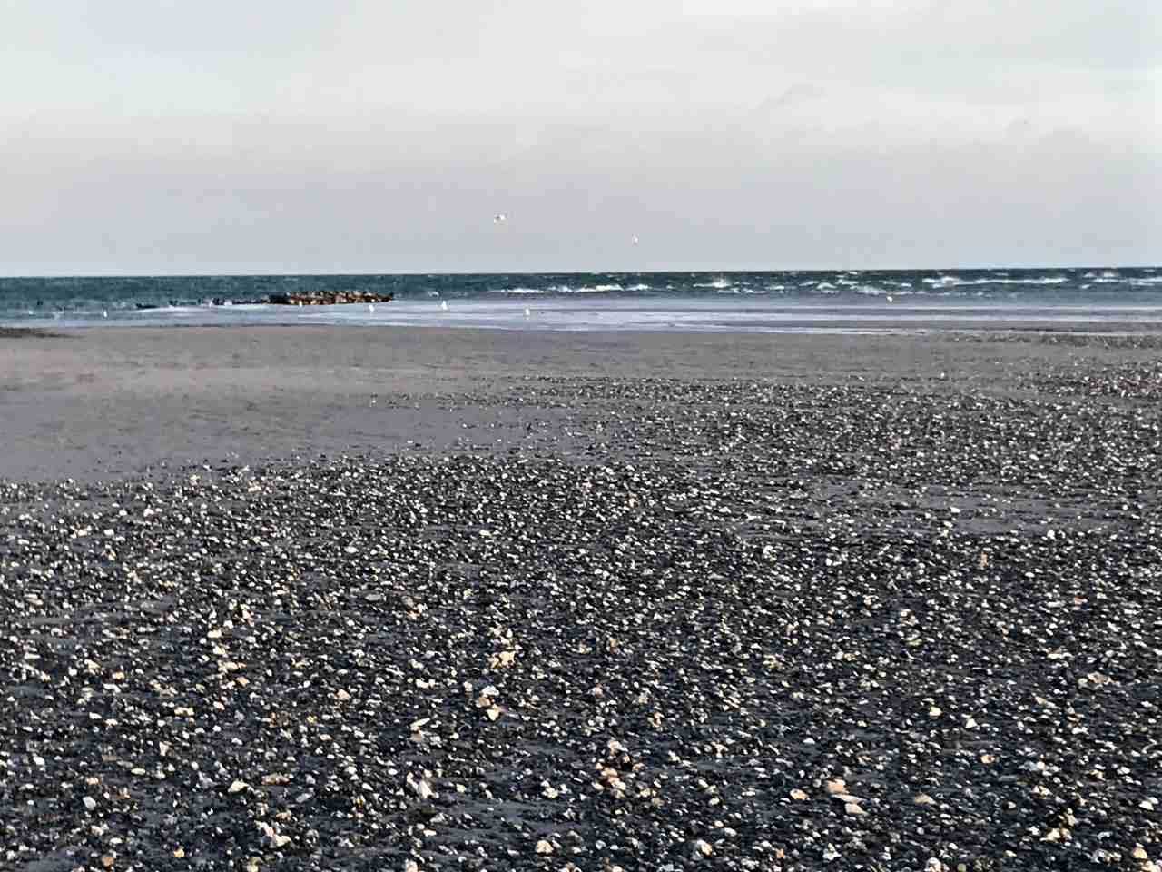 Sälar på sandbankar i havet.