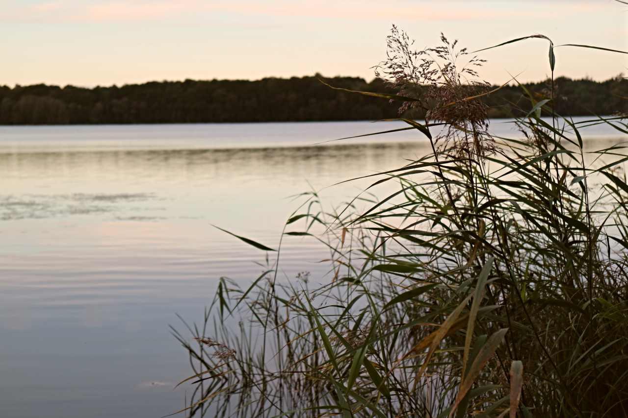 Vass vid sjön