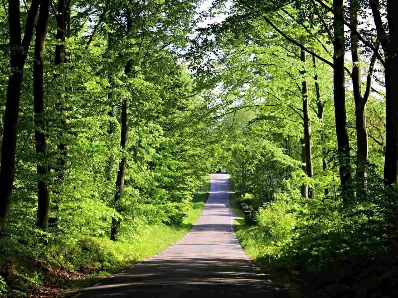 Vägen genom bokskogen.